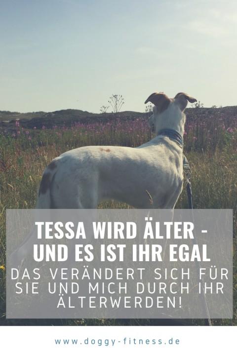 Tessa wird älter – und es ist ihr egal! – Alterungsprozess beim Hund