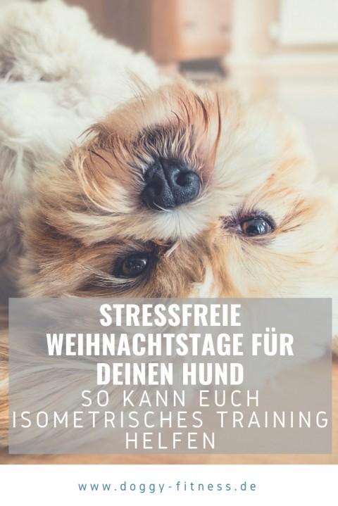 So hilft isometrisches Training deinem Hund entspannt durch stressige Weihnachtstage zu kommen!