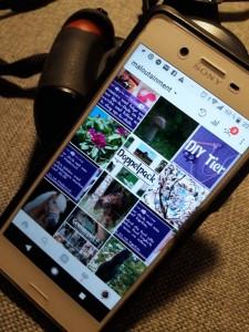 Pinterest Smartphone Maloutainment Fotografie Handy Natur Tier Kamera Blog Tipps Tricks Social Media Snapchat Facebook Instagram Natur Pilz Heide