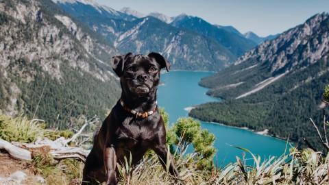 Wanderung mit Hund & Rucksack-Packliste