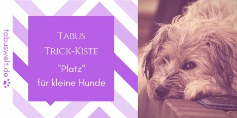 """Tabus Trick-Kiste: """"Platz für kleine Hunde"""""""