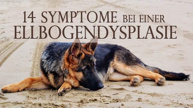 Post-14-Symptome-Ellbogendysplasie