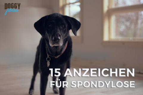 Diese 15 wichtigsten Symptome bei Spondylose solltest du kennen!