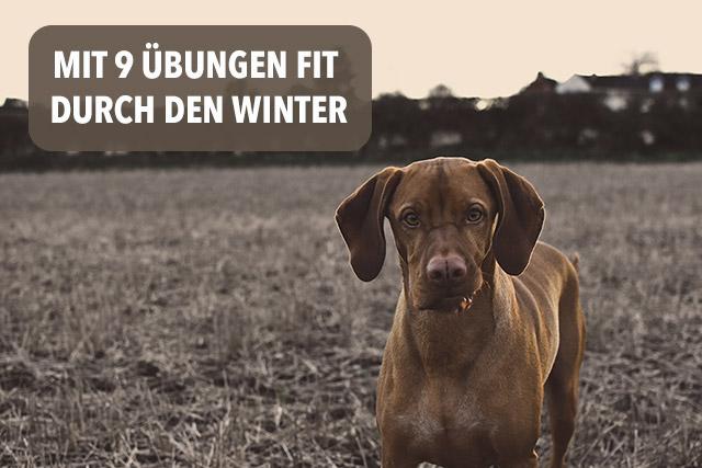 Beschäftigung Hund im Winter