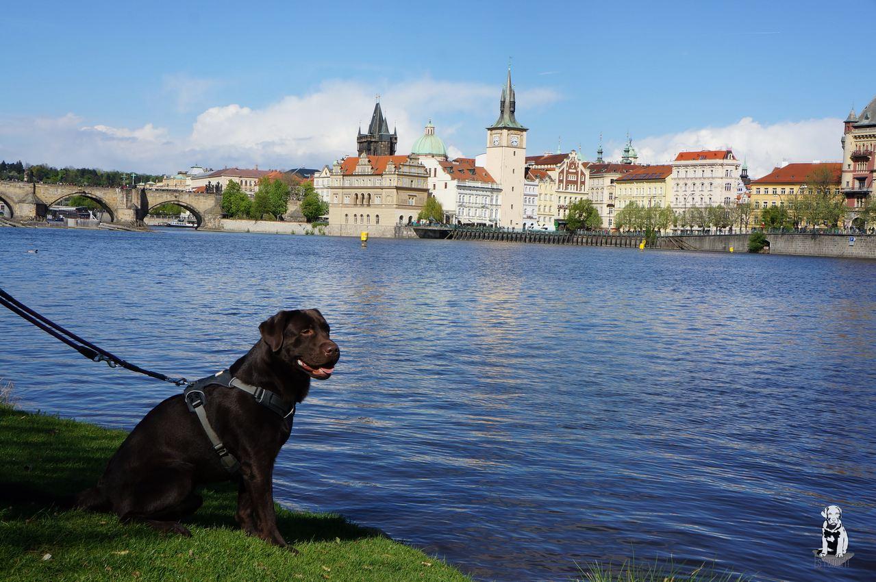 Prag mit Hund 1