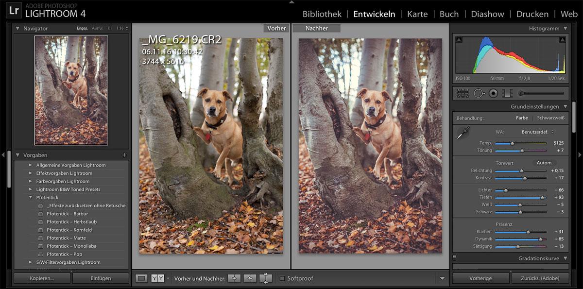 preset-kornfeld-pfotentick-kalte-schnauze_3