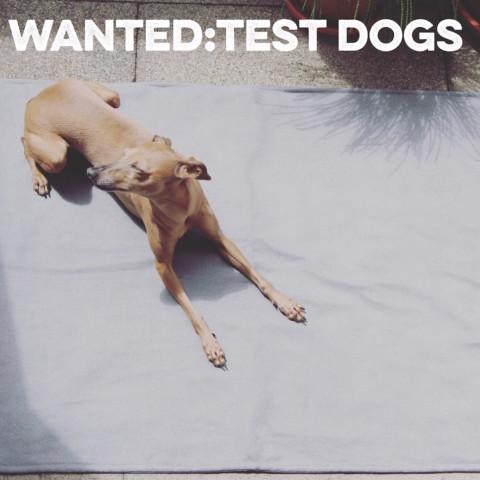 Produkttester für Hundezubehör von alcott gesucht