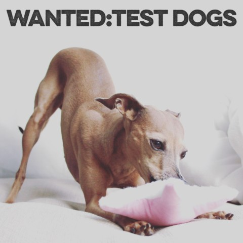 Produkttester für Hundezubehör gesucht
