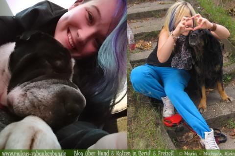 Obelix vs. Kingston – Seelenhund & Herzenshund steigen in den Ring