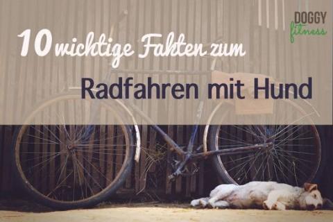 10 wichtige Fakten zum Radfahren mit Hund – das solltest du wissen!