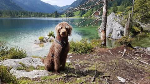 Salzburg mit Hund: Watzmann, Zauberwald und mein Lieblings-Panorama