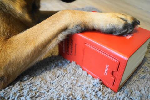 Wann darf ein Hund wie lange bellen?
