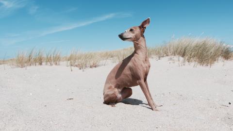 5 Tipps für achtsames und entspanntes Reisen mit Hund [Anzeige]