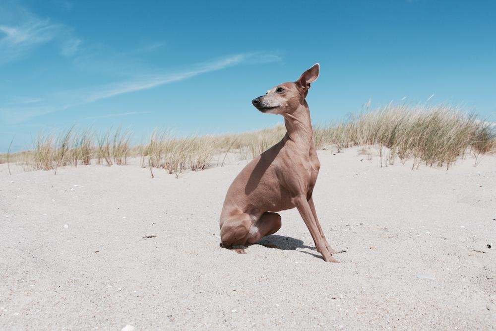 Reisen Hund entspannt