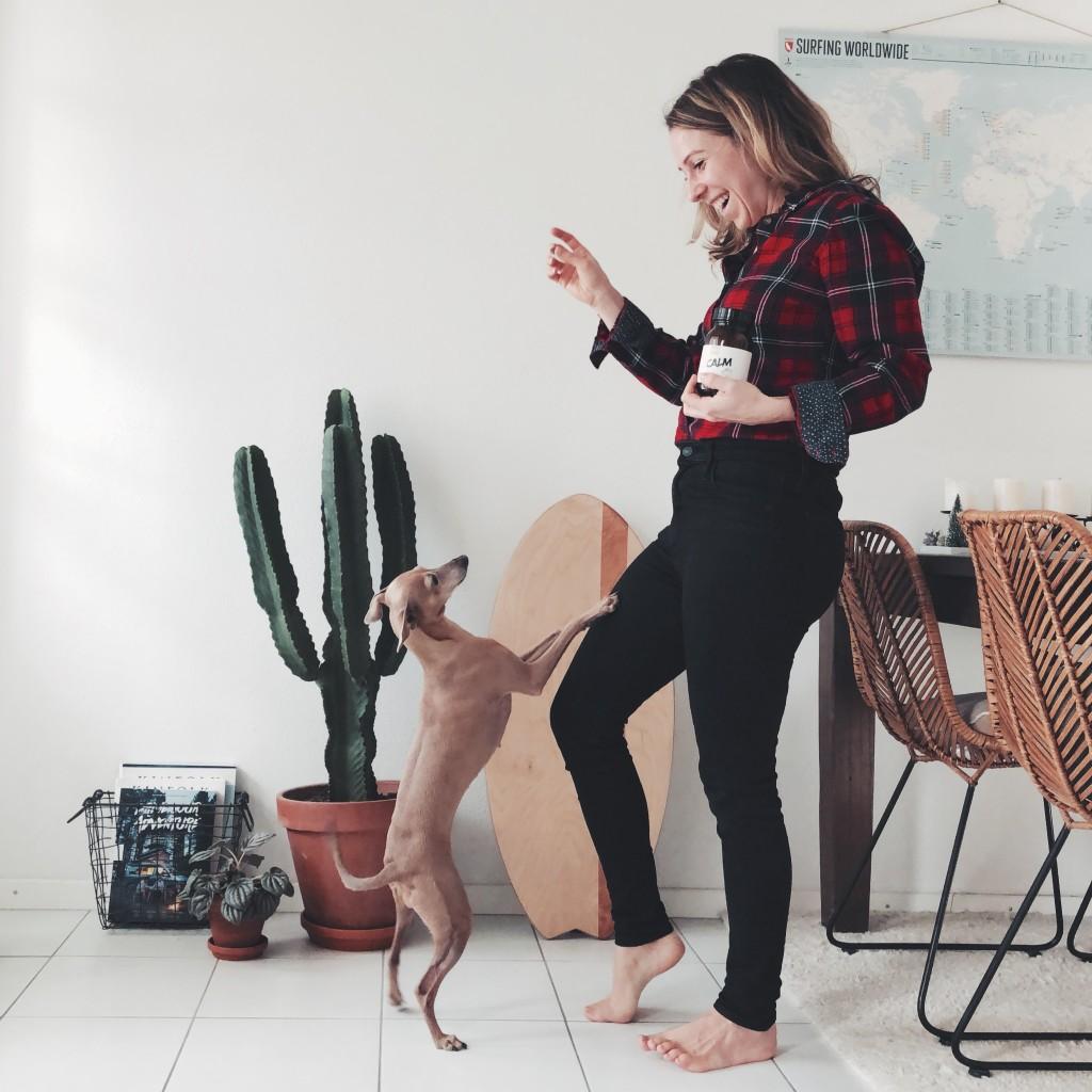 Reisen entspannt Hund