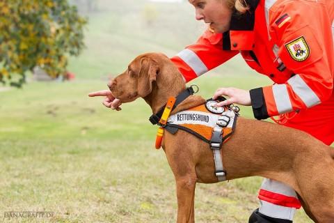 Wenn Hunde Leben retten: Nala auf der Suche nach Vermissten