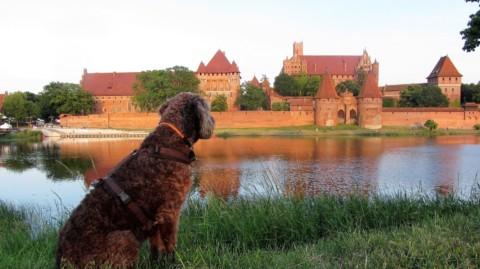2000 km Roadtrip Polen mit Hund und Wohnmobil in 14 Tagen. Es geht!