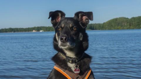 Wahre Freundschaft: zwei ungarische Hunde unterwegs