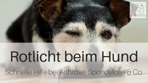 Rotlicht beim Hund – schnelle Hilfe bei Arthrose, Spondylose & Co.