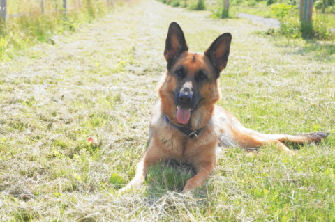 (Werbung) Hundehaftpflichtversicherungen im Vergleich