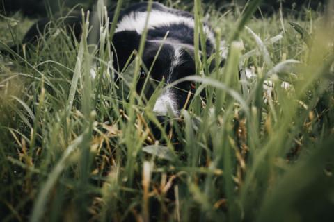 Warum fressen wir Gras?