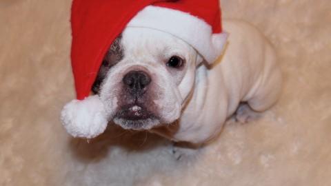 [Adventskalender] Merry Dogmas oder was würden unsere Hunde dazu sagen?