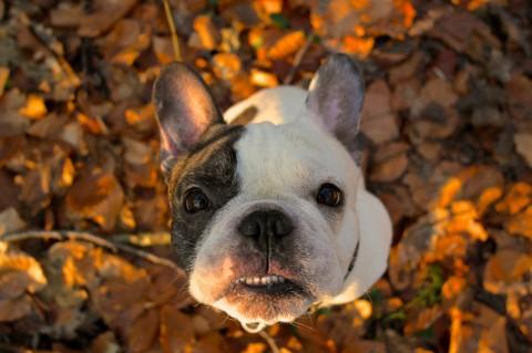 Sag niemals nie – Veränderungen im Hundeleben