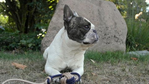 [DIY] Das neue Lieblingsspielzeug für deinen Hund