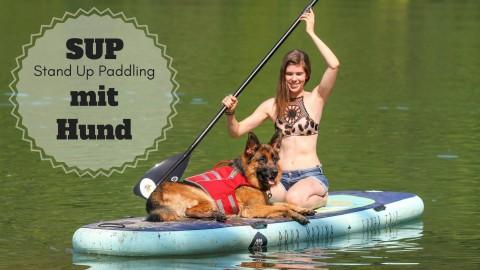 SUP (Stand Up Paddling) mit Hund