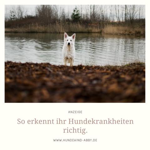 HUNDEKRANKHEITEN RICHTIG ERKENNEN. |WERBUNG
