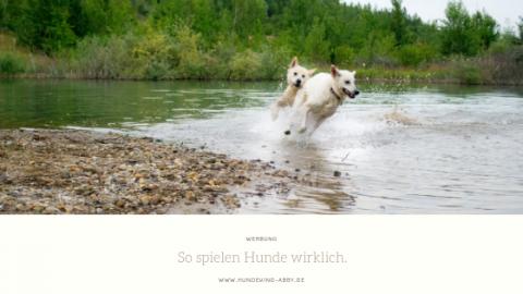 SO SPIELEN HUNDE || WERBUNG