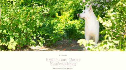 KOPFKINO AUS – UNSERE KURSEMPFEHLUNG || WERBUNG