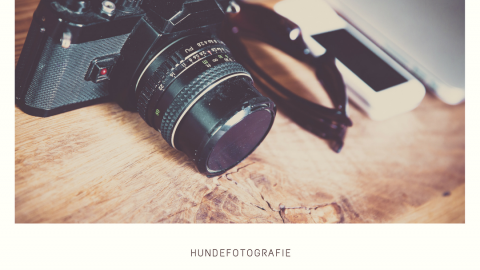 HUNDEFOTOGRAFIE – SO WERDEN DIE FOTOS IMMER BESSER. [WERBUNG]