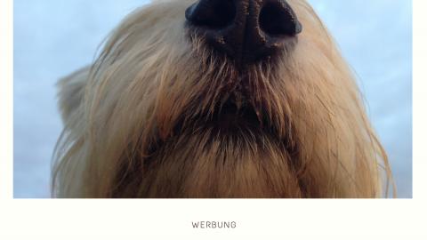 ZOS FÜR JEDERMANN || WERBUNG