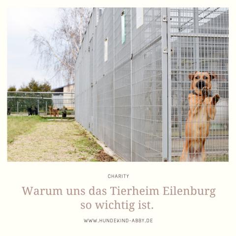 TIERHEIMVORSTELLUNG: EILENBURG