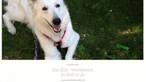 ZOS – SO GEHT`S ZUM WETTBEWERB || WERBUNG