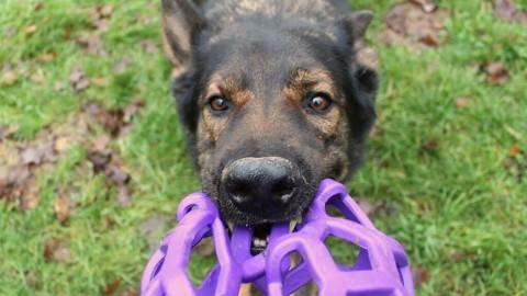 3 Übungen zur Impulskontrolle – wie dein Hund lernt, nicht auszuflippen