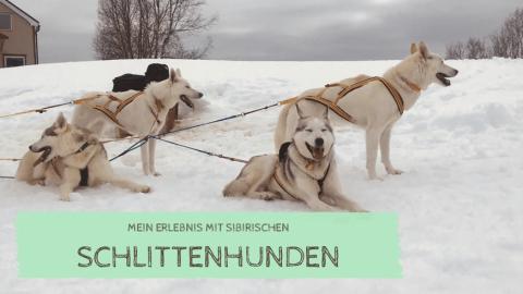 Les Wauz in Norwegen: Mit Schlittenhunden fahren und sie erleben