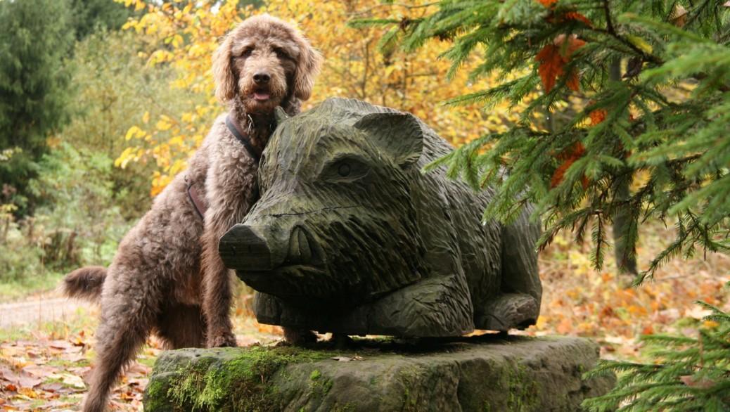 Arboretum WeltWald im Harz mit Hund