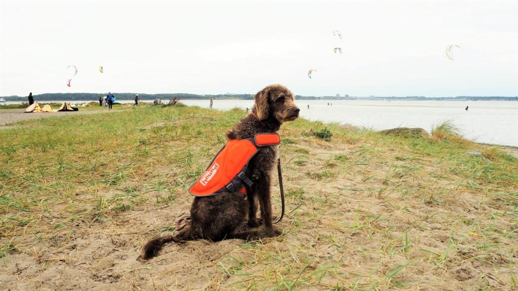 schwimmweste-fuer-hunde