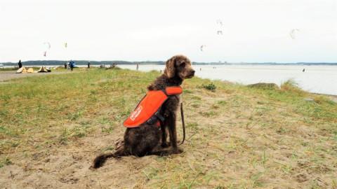 Bobby und das Meer – ein wasserscheuer Hund in Laboe