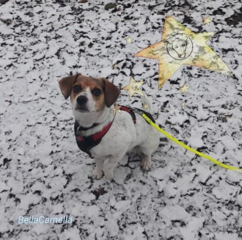 Im Zeichen der midoggy Weihnachtssterne- oder ein Brief an meinen Hund