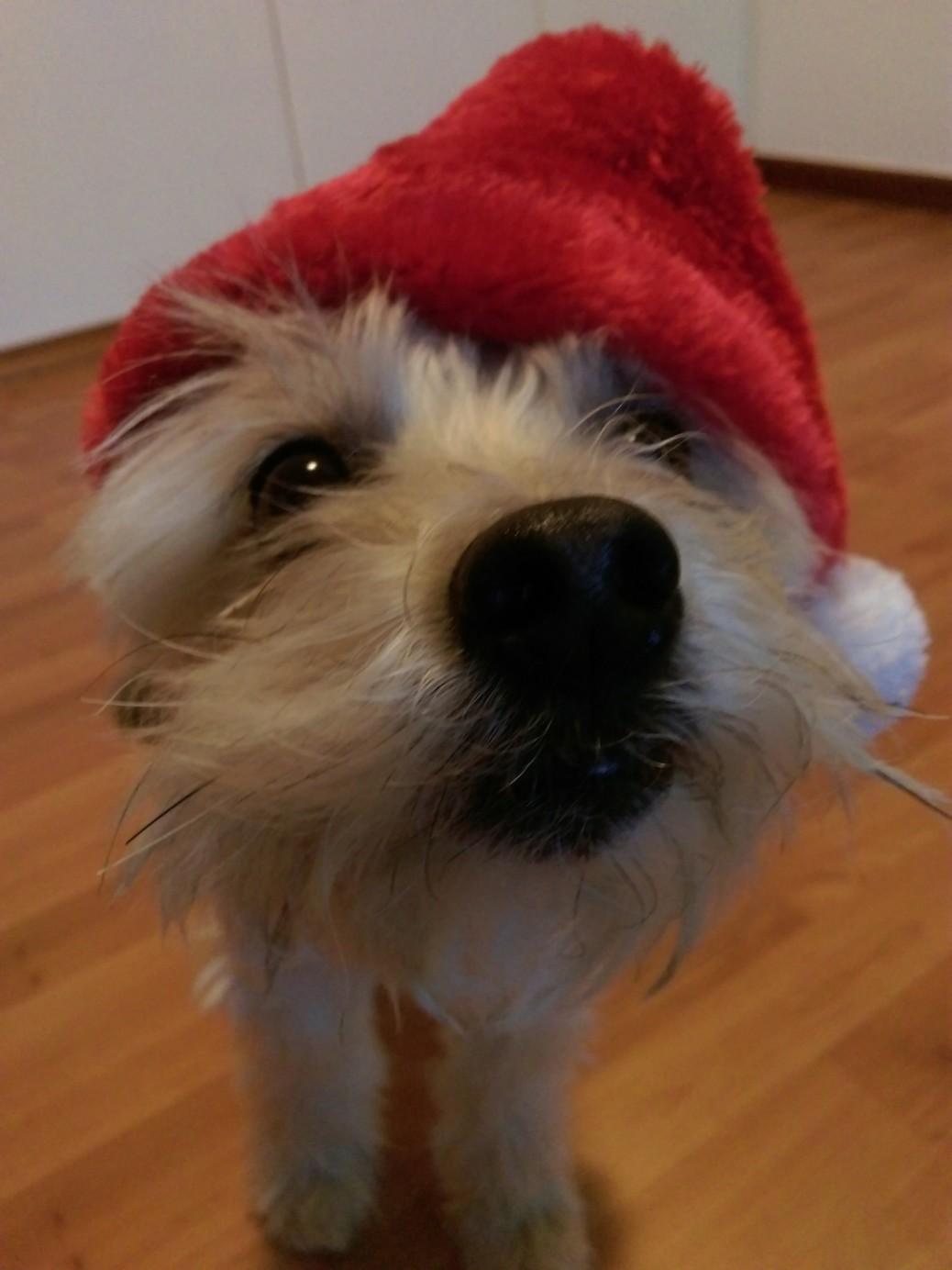 Hundekekse für empfindliche Hunde