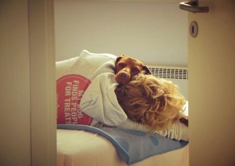 Hatschi und Husten – wenn der Hund sich erkältet hat