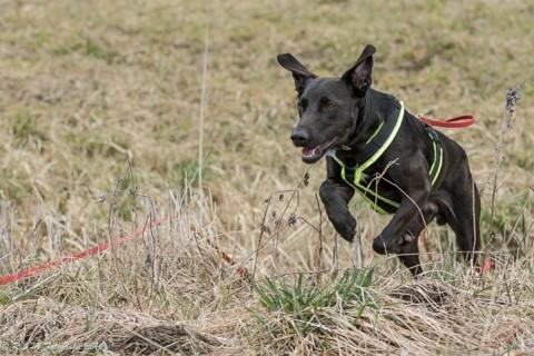 """Der Hund ist weg – 6 Tipps, wie ihr euch auf den """"GAU"""" vorbereiten könnt"""