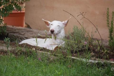 Mein Leben mit einem Handicap-Hund – besonders und bereichernd