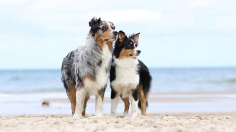 Sommer Essentials – für Hund und Zweibeiner
