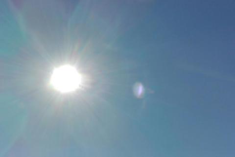 Mantrailing: Wann und warum ist es zu heiß zum Trailen?