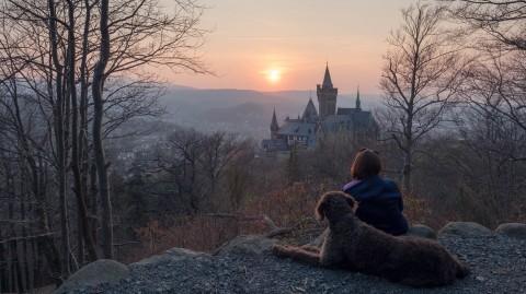 Beste Aussicht auf Schloss Wernigerode [Lieblingsplätze im Harz]