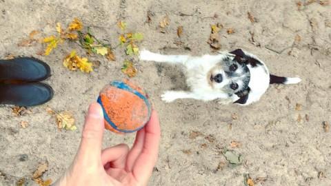 Vom sozialen Miteinander in der Mensch-Hund-Beziehung